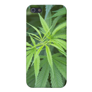 Close-Up View Of Marijuana Plant, Malkerns Case For iPhone 5