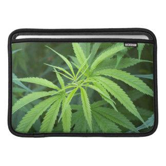 Close-Up View Of Marijuana Plant, Malkerns MacBook Air Sleeves
