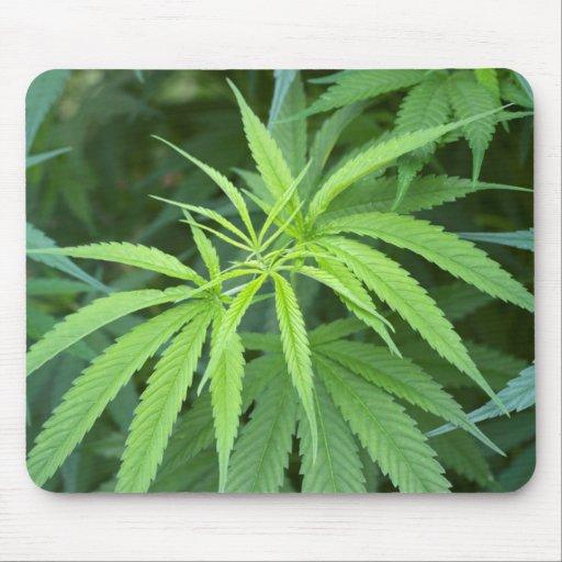 Close-Up View Of Marijuana Plant, Malkerns Mousepad