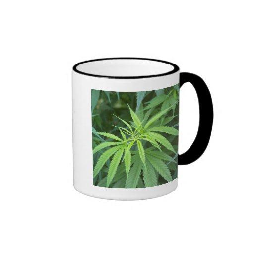 Close-Up View Of Marijuana Plant, Malkerns Coffee Mugs