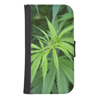 Close-Up View Of Marijuana Plant, Malkerns Phone Wallet