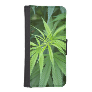 Close-Up View Of Marijuana Plant, Malkerns Phone Wallet Case