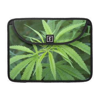 Close-Up View Of Marijuana Plant, Malkerns Sleeve For MacBook Pro