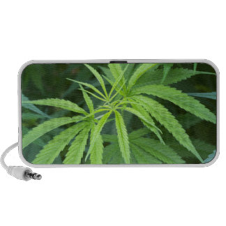 Close-Up View Of Marijuana Plant, Malkerns Speaker System
