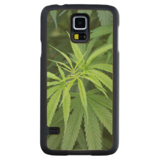 Close-Up View Of Marijuana Plant, Malkerns Carved® Maple Galaxy S5 Case