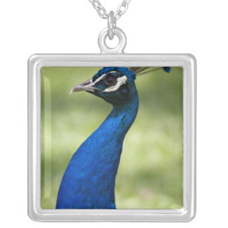 Close-up view of Peacock, Botanical Gardens, Square Pendant Necklace