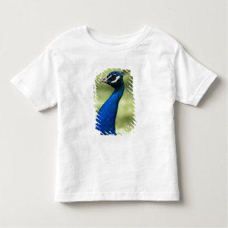 Close-up view of Peacock, Botanical Gardens, Toddler T-Shirt