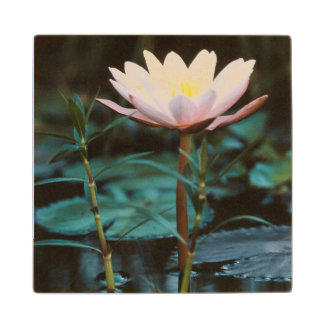 Close-Up view of Water Lily at Inle Lake Wood Coaster