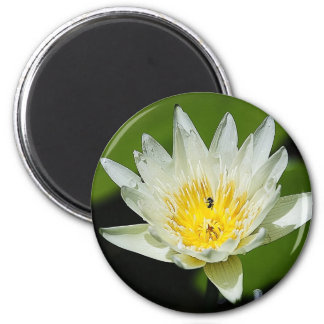 Close-up White Water Lily Flower and Bee Magnets