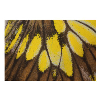 Close-up Wing Pattern of Tropical Butterfly Wood Wall Art