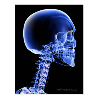Close up x-ray of the bones in the neck postcard
