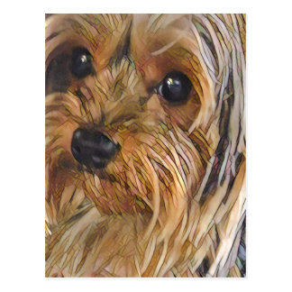 Close-up Yorkshire terrier postcard