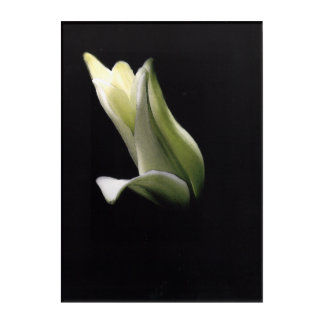 """Closed Lily"" wall art"