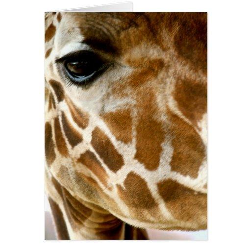 Closeup Giraffe Face Wild Animals Nature Photo Greeting Cards
