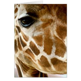 Closeup Giraffe Face Wild Animals Nature Photo Greeting Card
