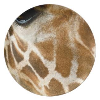 Closeup Giraffe Face Wild Animals Nature Photo Dinner Plate