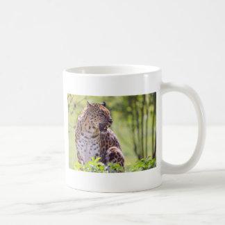 Closeup leopard in the vegetation mugs