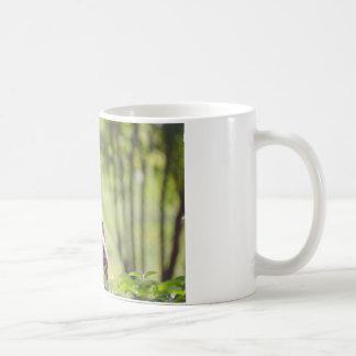 Closeup leopard in the vegetation coffee mug
