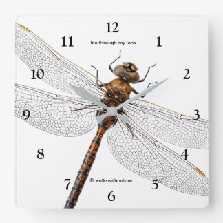 Closeup of a Canada Darner Dragonfly Square Wall Clock