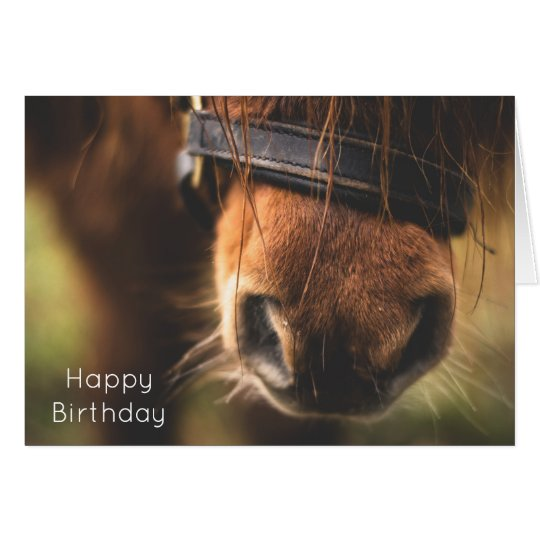 Closeup of a Cute Brown Horse Nose Birthday