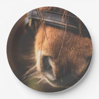 Closeup of a Cute Brown Horse Nose Paper Plate