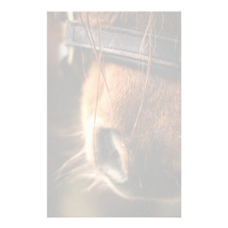 Closeup of a Cute Brown Horse Nose Stationery