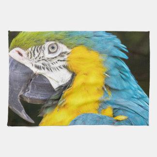 Closeup of blue-and-yellow macaw tea towel