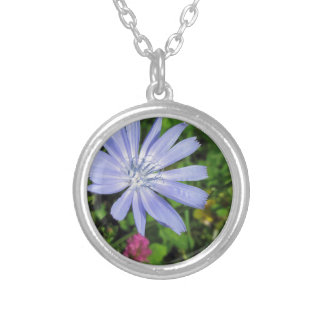 Closeup of blue Chicory flower on a background of Round Pendant Necklace