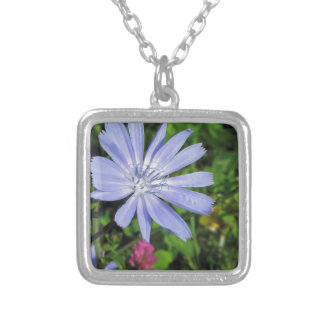 Closeup of blue Chicory flower on a background of Square Pendant Necklace