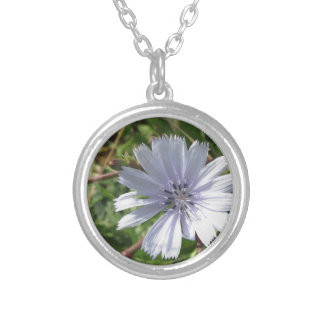 Closeup of blue Chicory flower Round Pendant Necklace