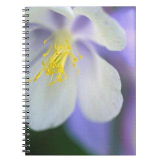 Closeup of Colorado Columbine flower. Notebooks