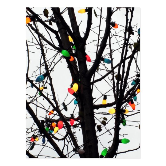 Closeup of colourful Christmas lights on branches Postcard