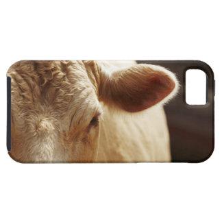 Closeup of cow face iPhone 5 case