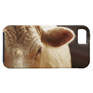 Closeup of cow face iPhone 5 covers