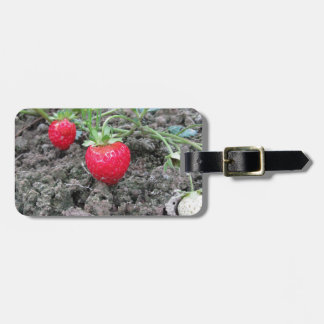 Closeup of fresh organic strawberries in the garde tag for bags