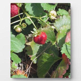 Closeup of fresh organic strawberries photo plaques