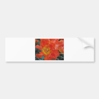 Closeup of orange tulip with droplets in spring bumper sticker