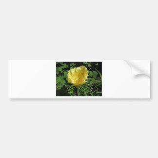 Closeup of yellow tulip in spring bumper sticker