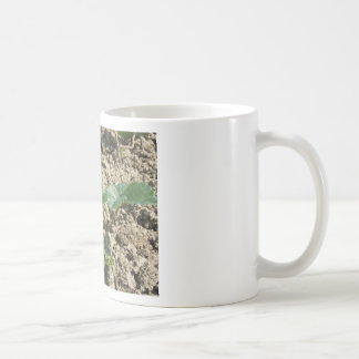 Closeup of young strawberry plant in blossom basic white mug