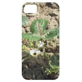 Closeup of young strawberry plant in blossom iPhone 5 covers