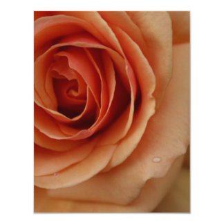 Closeup Peach Rose 11 Cm X 14 Cm Invitation Card