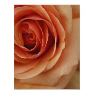 """Closeup Peach Rose 4.25"""" X 5.5"""" Invitation Card"""