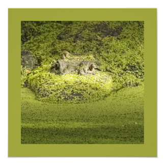Closeup Photograph of a Gator in Duckweed 5.25x5.25 Square Paper Invitation Card