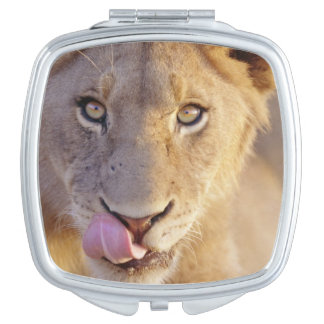 Closeup portrait of a young male lion lying compact mirror