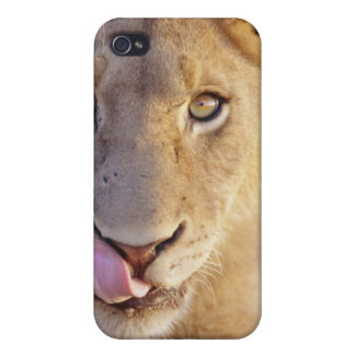 Closeup portrait of a young male lion lying iPhone 4 cases