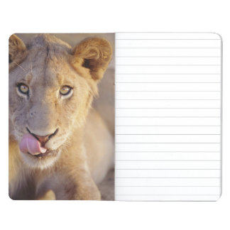 Closeup portrait of a young male lion lying journal