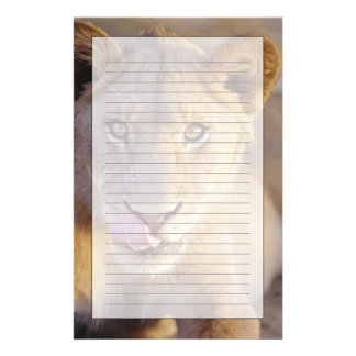 Closeup portrait of a young male lion lying stationery