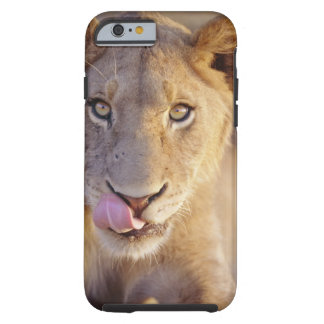 Closeup portrait of a young male lion lying tough iPhone 6 case