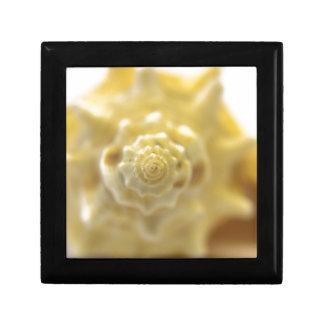 closeup shell small square gift box