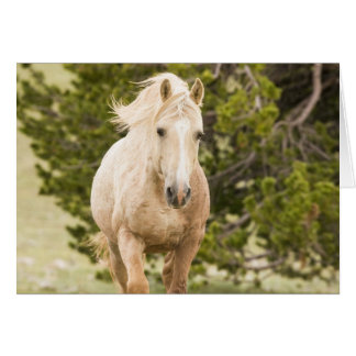 Cloud Comes Up the Hill Wild Horse Greeting Card